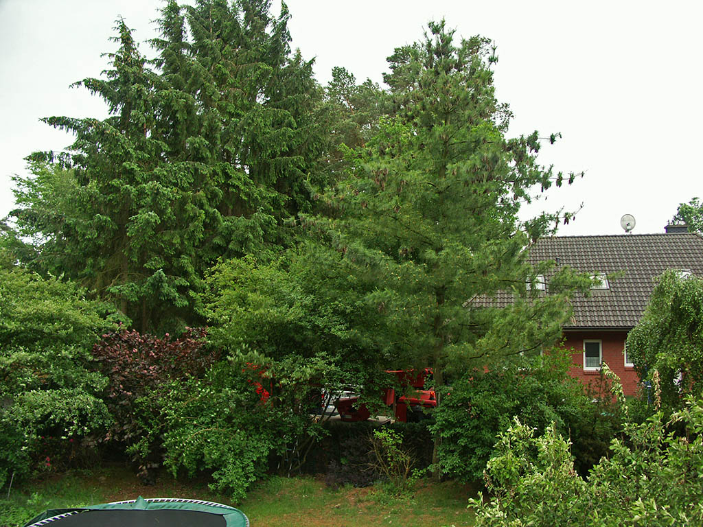 Tree cutting company at my neighbors - They ended up cutting the lower branches of the tall conifers to the left