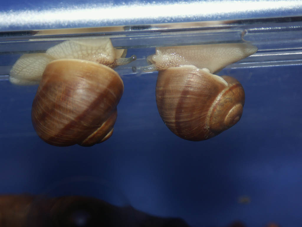 "Two of my snails - you could say - ""chilling out"""